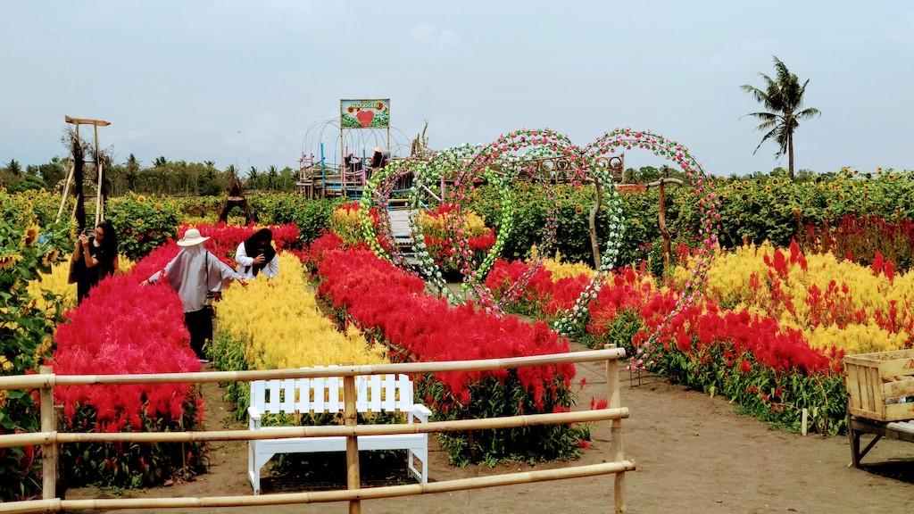 jogja-taman bunga matahari